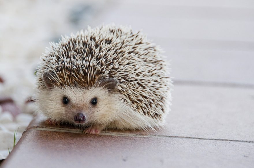 hedgehog concept, good to great, good to great the book, hedgehog